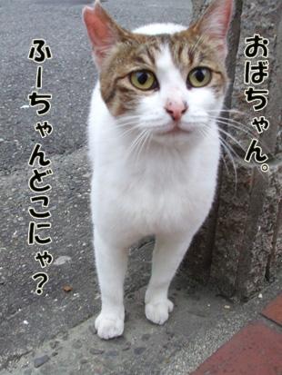 2011_05210026のコピー