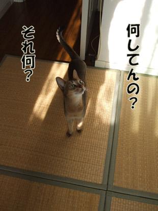 2011_08080009のコピー