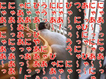 2011_08100008のコピー1