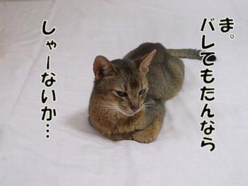 2011_09110034のコピー