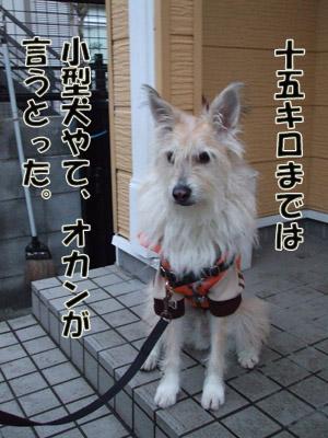 2011_01140028.jpg