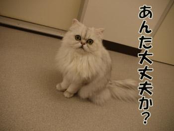 2011_01250008.jpg