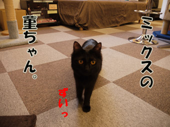 2011_01250046.jpg