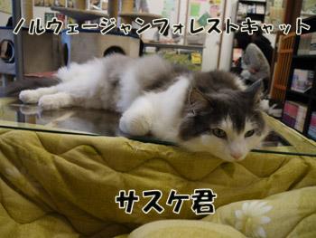 2011_01250120.jpg