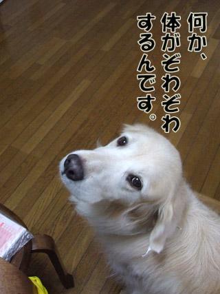 2011_02010007.jpg