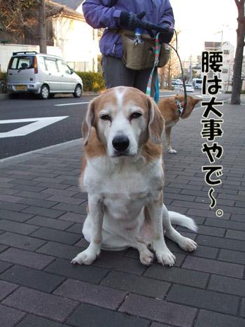 2011_02020025.jpg