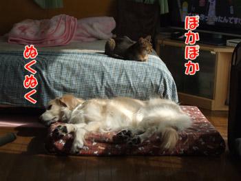 2011_02050009.jpg