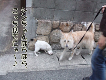 2011_02050012.jpg