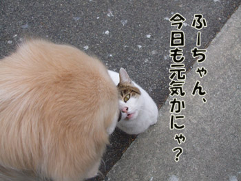 2011_02070023.jpg