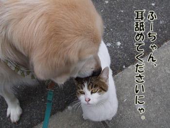 2011_02070026.jpg