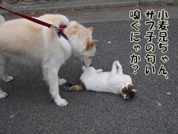 2011_02070032.jpg