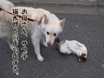 2011_02070033.jpg