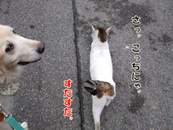 2011_02070036.jpg