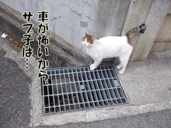 2011_02070038.jpg