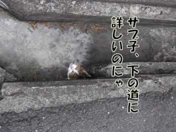 2011_02070040.jpg