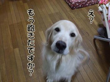 2011_02070068.jpg