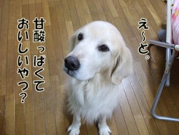 2011_02070070.jpg