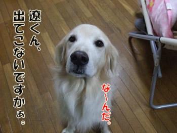 2011_02070075.jpg