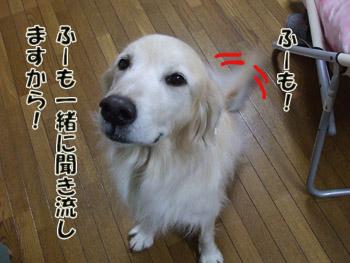 2011_02070076.jpg