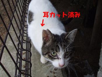 2011_02080014.jpg