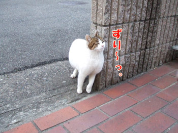 2011_02080015.jpg