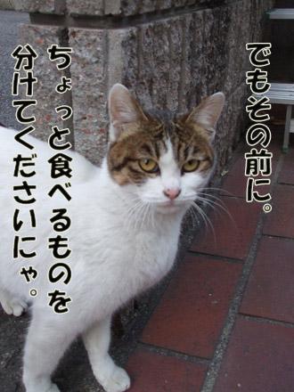2011_02080022.jpg