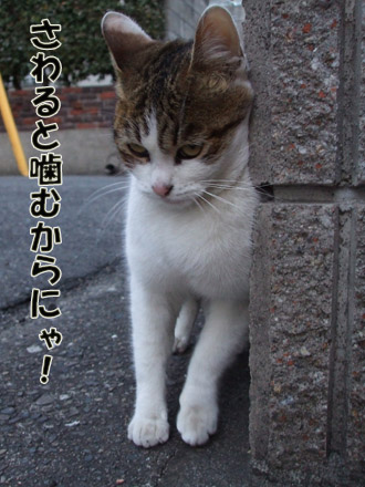 2011_02080030.jpg