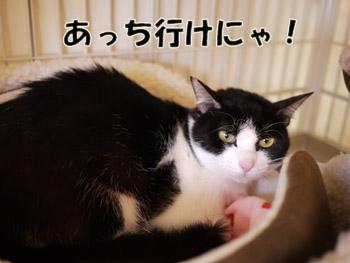 2011_02210001.jpg