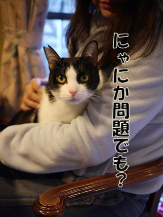 2011_02210030.jpg