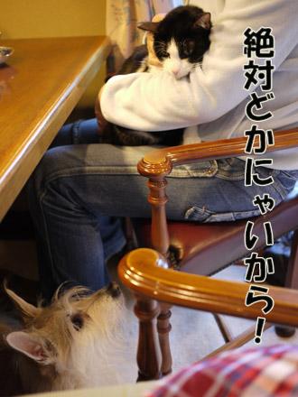 2011_02210031.jpg