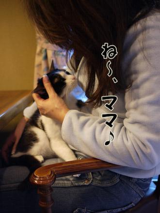 2011_02210032.jpg