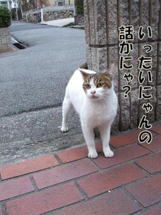 2011_02250042.jpg