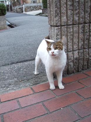 2011_02250042sabu.jpg