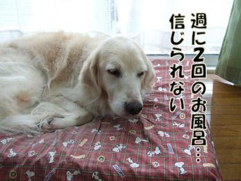 2011_02280005.jpg