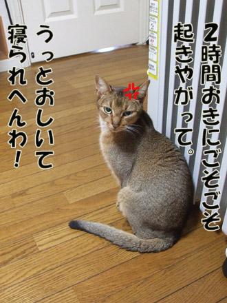 2011_03030003.jpg