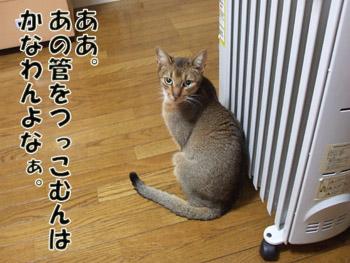 2011_03030007.jpg