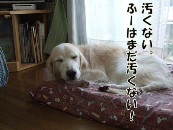 2011_03070026.jpg