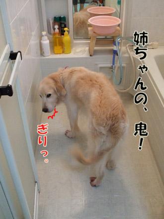 2011_03070029.jpg