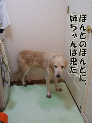 2011_03070045.jpg