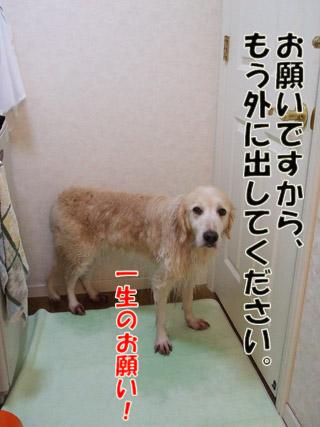 2011_03070047.jpg