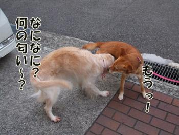 2011_03110008.jpg