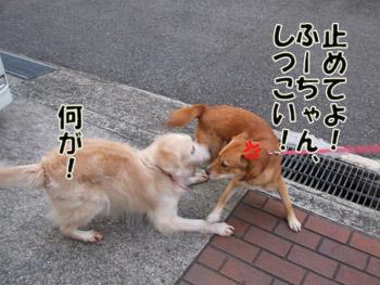 2011_03110009.jpg