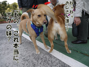 2011_03120004.jpg