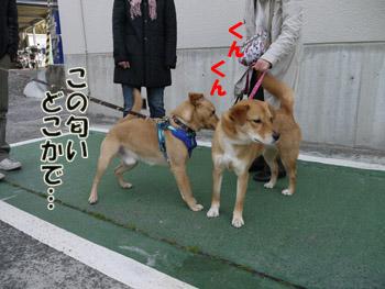 2011_03120010.jpg