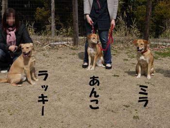 2011_03120053.jpg