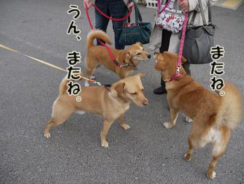 2011_03120124.jpg
