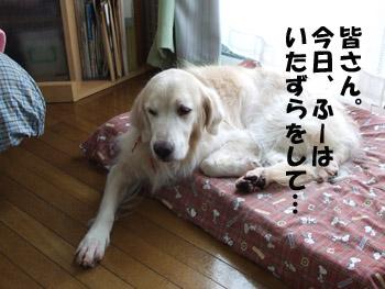 2011_03290037.jpg
