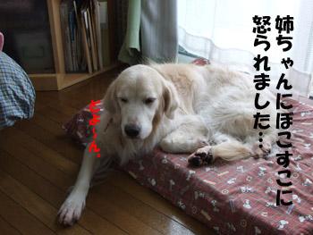 2011_03290038.jpg