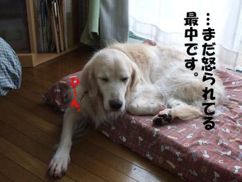 2011_03290039.jpg