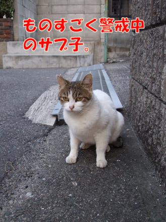 2011_03310070.jpg